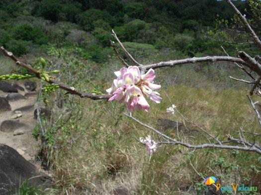 Poas, Rincon de la Vieja, Playas de Guanacaste 1