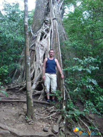 Влажный лес на склонах вулкана Rincon de la Vieja