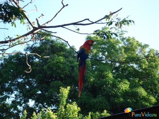 Птицы Коста Рики