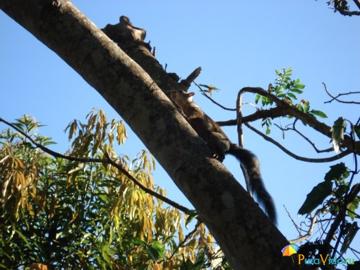 Фауна Коста Рики