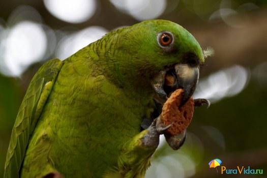 Попугай с печеньм