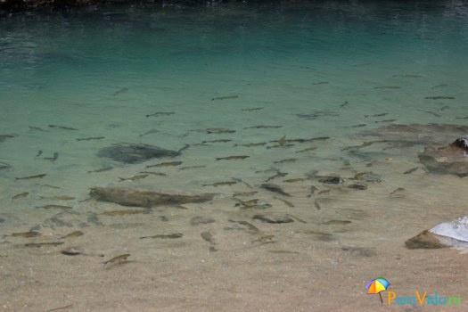 Форелька ручная - Водопад Ла Фортуна в парке Мундо Авентура