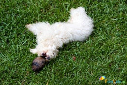 Собачка с кокосом