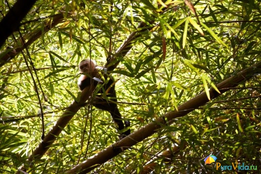 Животный мир Коста-Рики 1