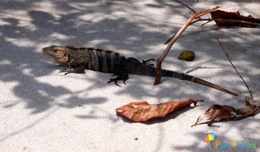 Животный мир Коста-Рики 4