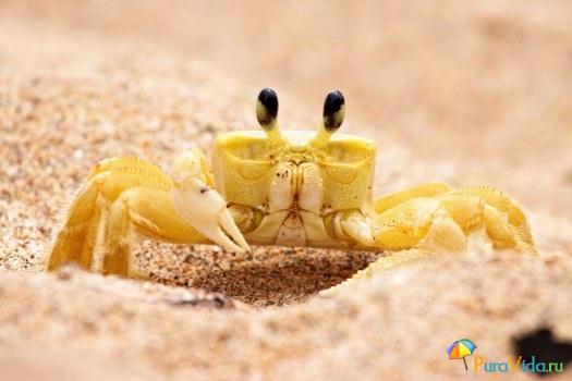 Животный мир Коста-Рики 5