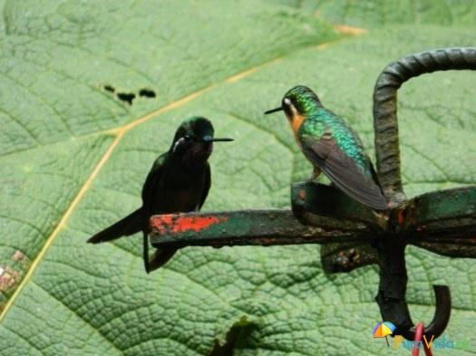 шустрые колибри